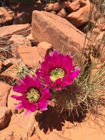 bloom-1469696_1920.jpg