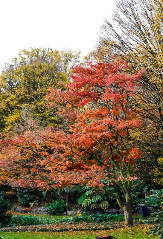 London Trees-1