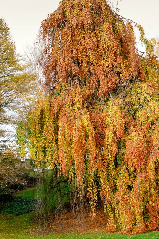 London Trees-2