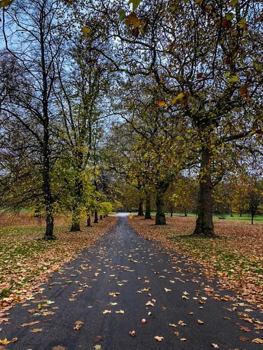London Trees-4