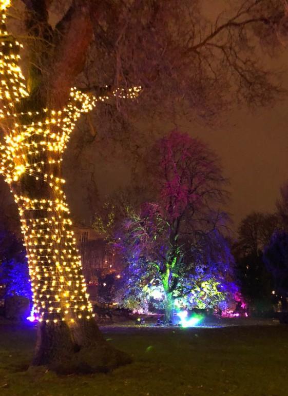 York Christmas garden-5