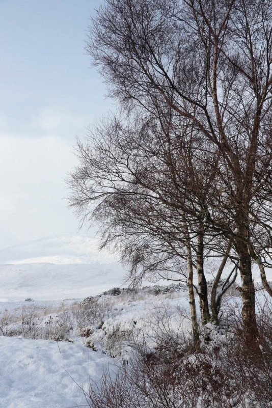 Scottish highlands-5